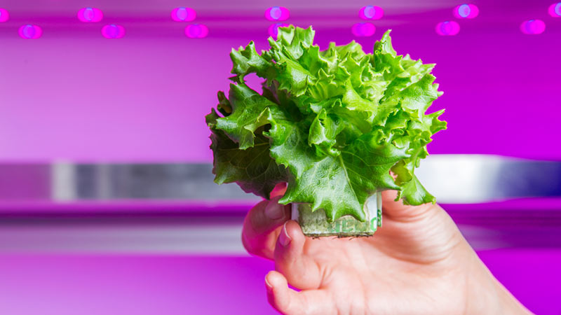 growing food indoors